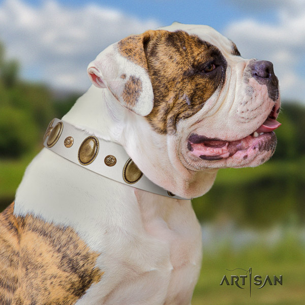 American Bulldog basic training full grain genuine leather collar with decorations for your pet