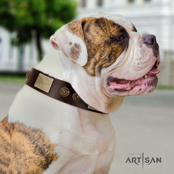 American Bulldog everyday use genuine leather collar with decorations for your four-legged friend