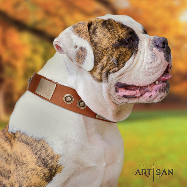 American Bulldog everyday walking full grain genuine leather collar with adornments for your pet