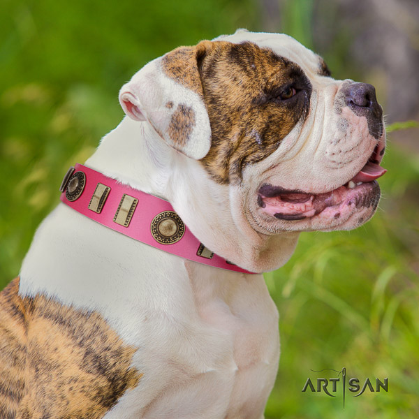 American Bulldog stylish walking full grain genuine leather collar with embellishments for your four-legged friend