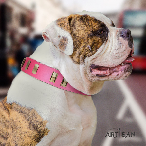 American Bulldog comfortable wearing genuine leather collar with studs for your dog