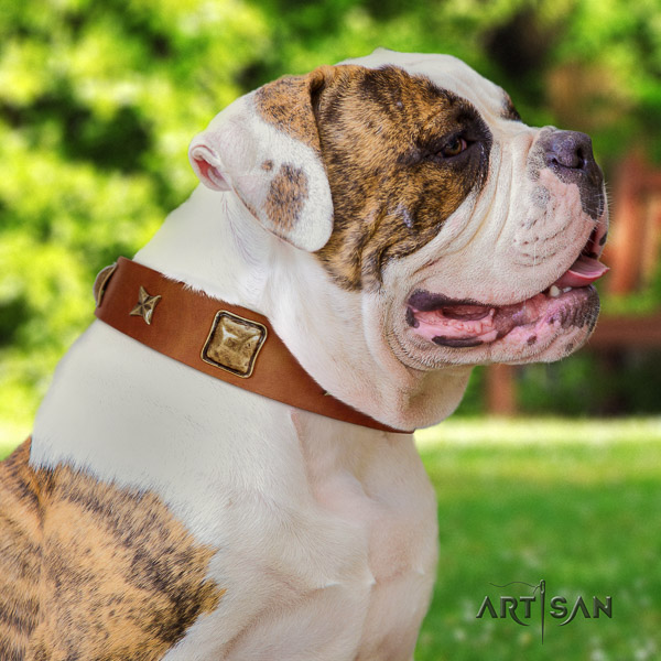 American Bulldog easy wearing full grain natural leather collar with adornments for your four-legged friend