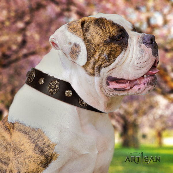 American Bulldog easy wearing full grain leather collar with decorations for your canine