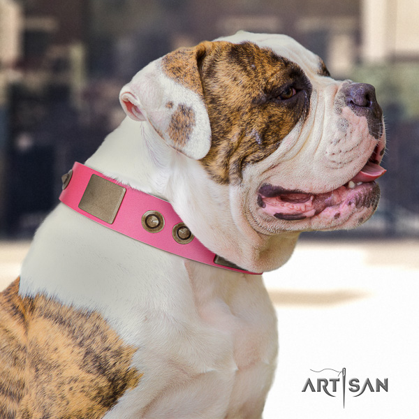 American Bulldog handy use leather collar with studs for your doggie