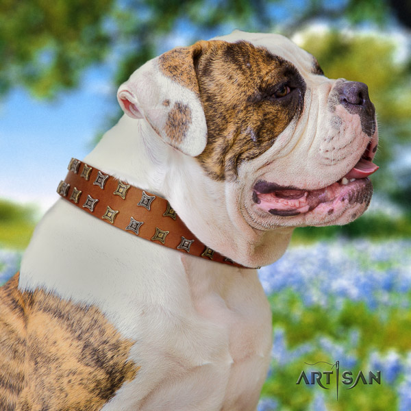 American Bulldog daily use full grain natural leather collar with decorations for your canine