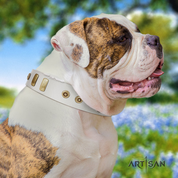 American Bulldog walking full grain natural leather collar with adornments for your doggie