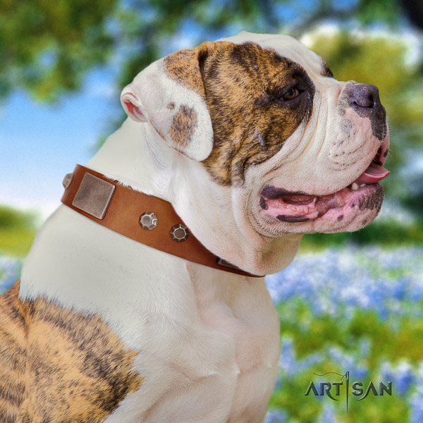 American Bulldog comfortable wearing full grain genuine leather collar with decorations for your four-legged friend