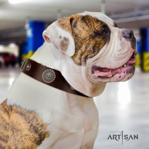 American Bulldog handy use genuine leather collar with adornments for your four-legged friend