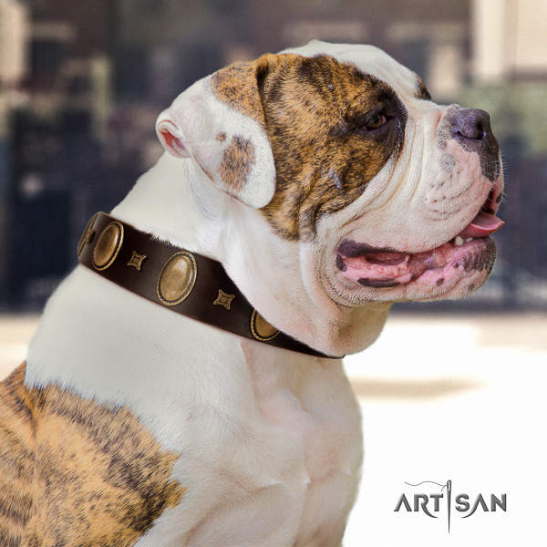 American Bulldog comfortable wearing natural leather collar with embellishments for your canine