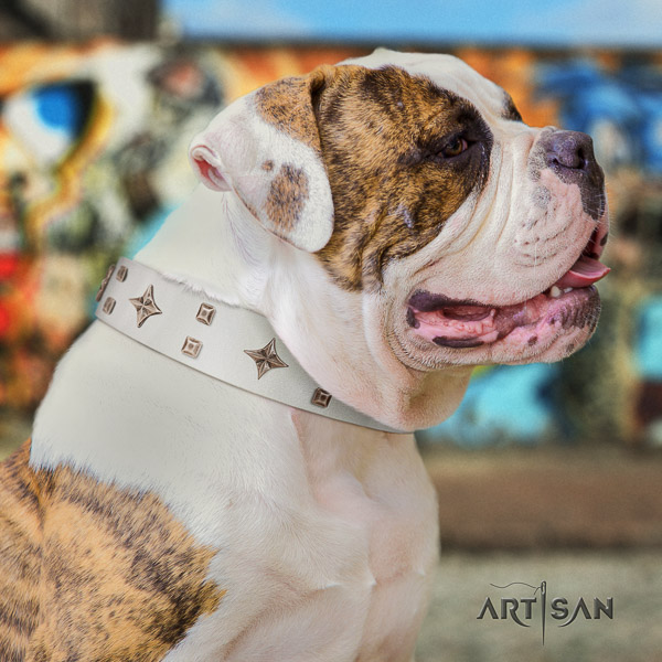 American Bulldog daily walking full grain leather collar with embellishments for your dog