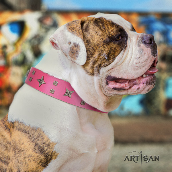 American Bulldog stylish walking genuine leather collar with adornments for your four-legged friend