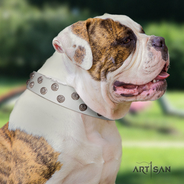 American Bulldog handy use full grain genuine leather collar with decorations for your doggie