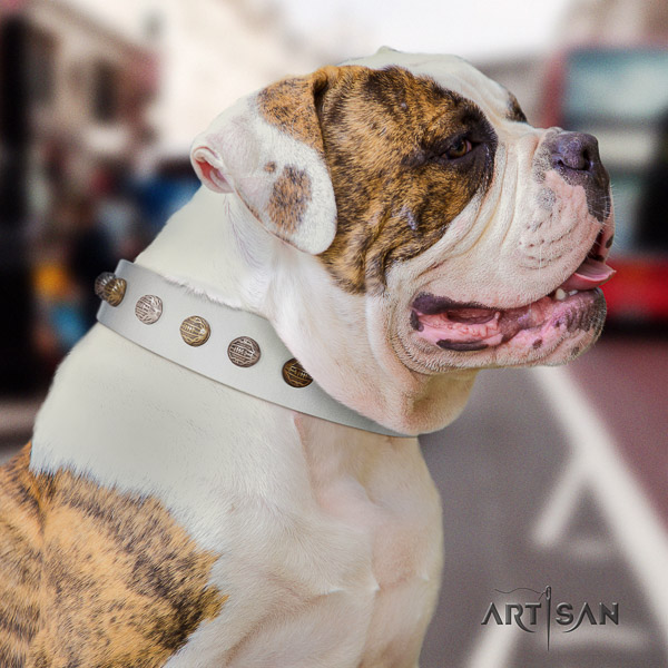 American Bulldog comfortable wearing full grain genuine leather collar with decorations for your pet