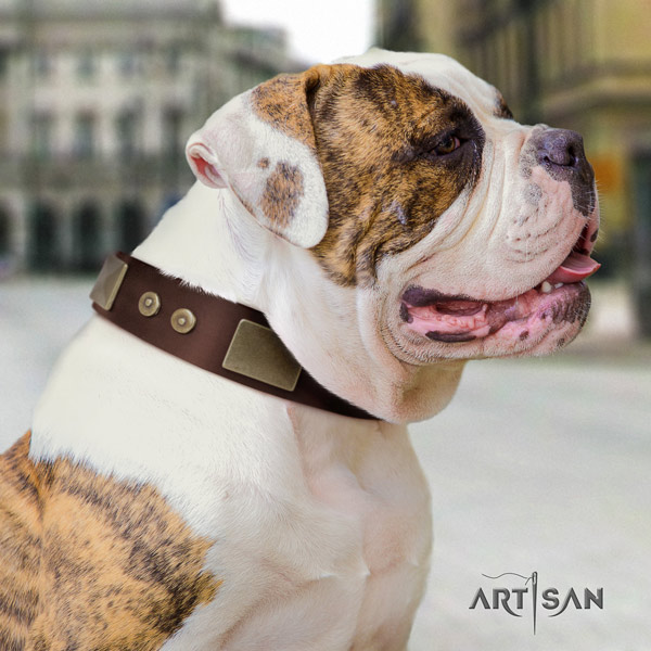 American Bulldog decorated full grain leather dog collar with significant decorations