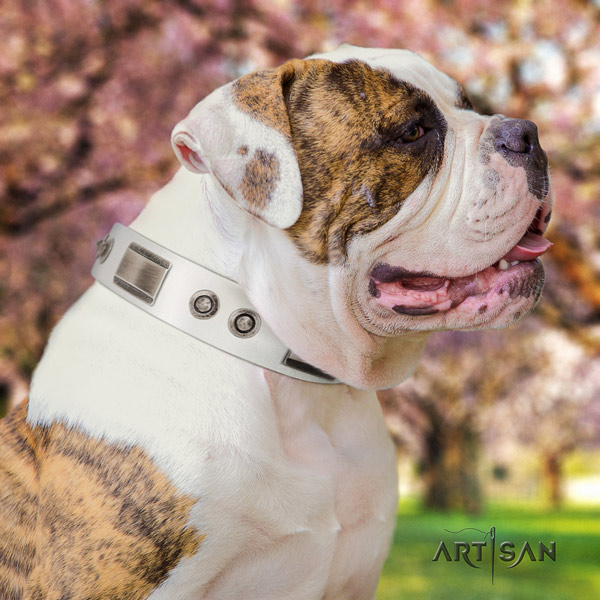 American Bulldog amazing leather dog collar with studs