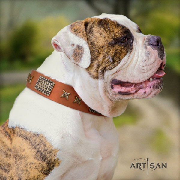 American Bulldog embellished genuine leather dog collar with exceptional embellishments