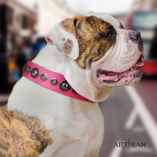 American Bulldog decorated genuine leather dog collar with inimitable decorations