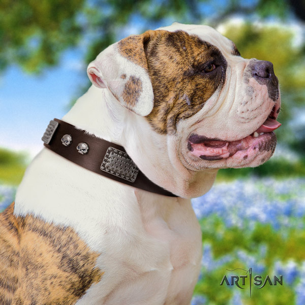 American Bulldog embellished genuine leather dog collar with remarkable studs