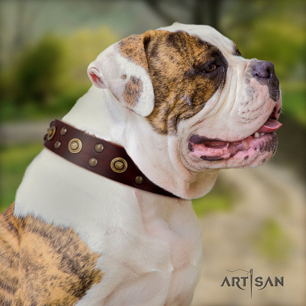 American Bulldog adorned genuine leather dog collar with significant decorations