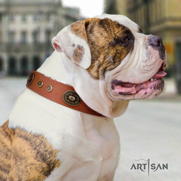 American Bulldog decorated full grain leather dog collar with incredible adornments