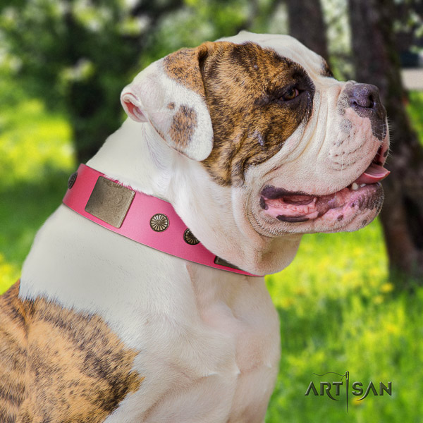 American Bulldog handy use full grain leather collar with adornments for your dog