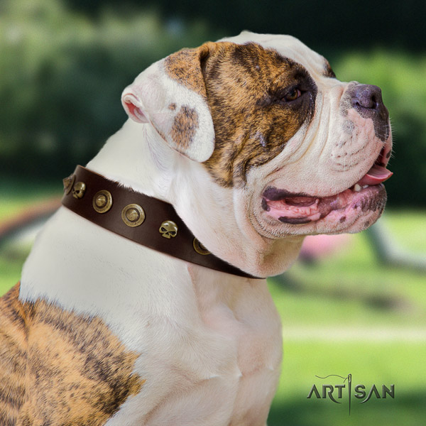 American Bulldog walking full grain leather collar with adornments for your pet