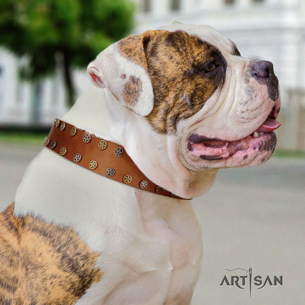 American Bulldog stylish walking full grain leather collar with embellishments for your dog