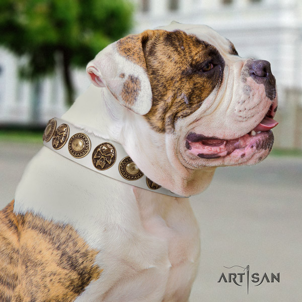 American Bulldog comfortable wearing genuine leather collar with decorations for your pet