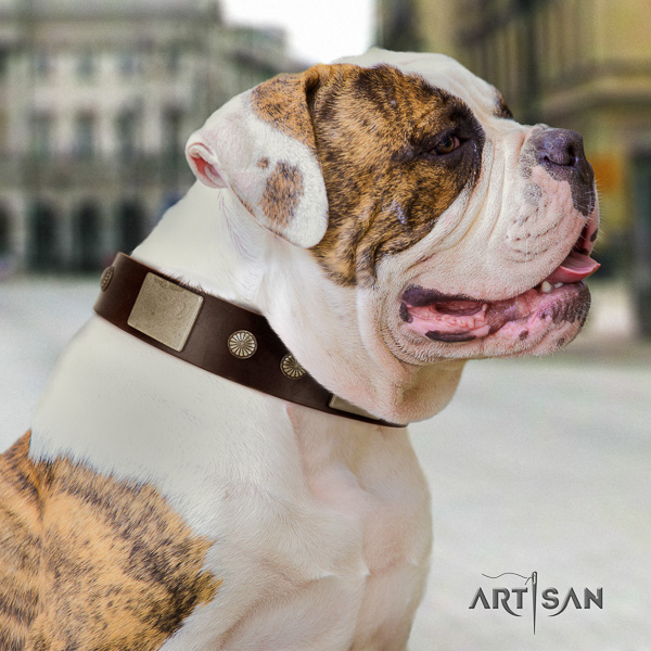American Bulldog handy use full grain natural leather collar with decorations for your dog