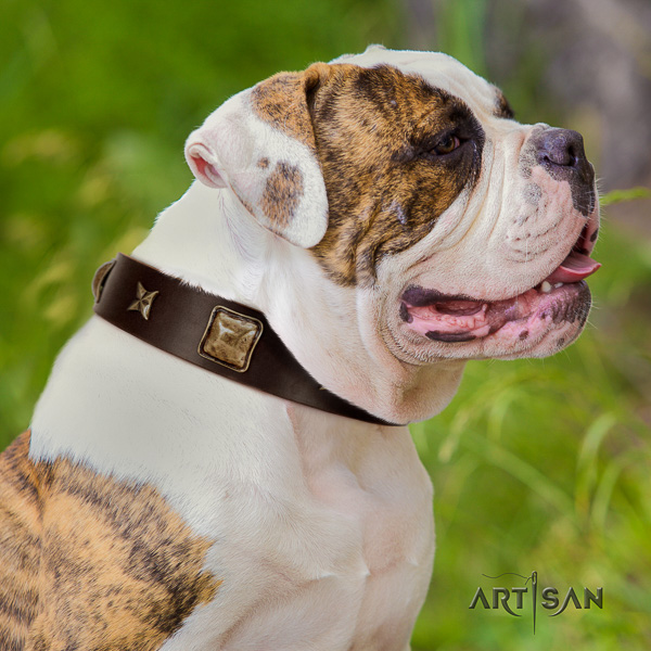 American Bulldog everyday use natural leather collar with adornments for your dog