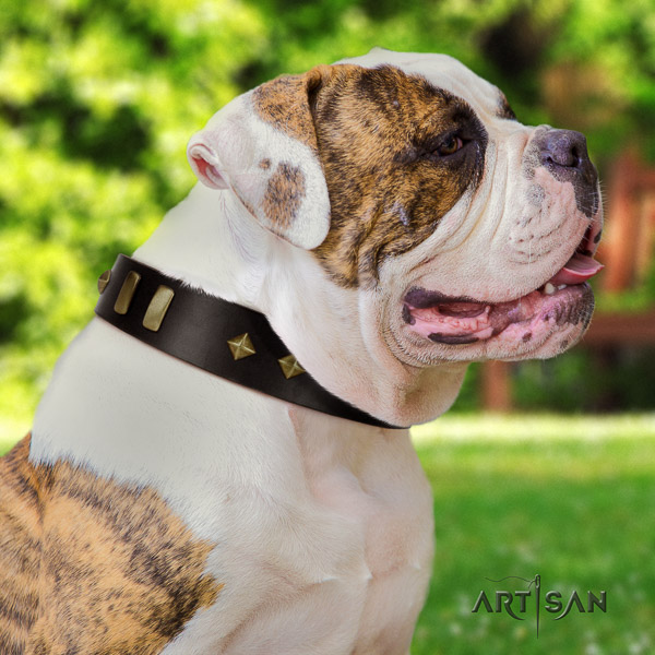 American Bulldog comfy wearing full grain natural leather collar with studs for your pet