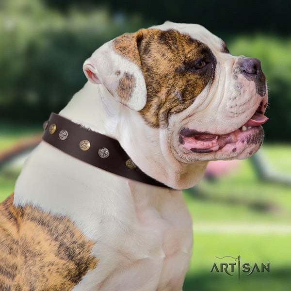 American Bulldog adorned genuine leather dog collar with stylish decorations