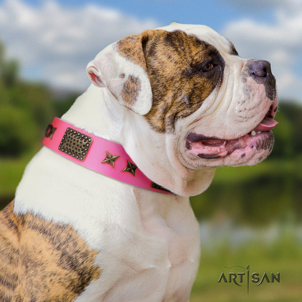 American Bulldog embellished full grain leather dog collar with stylish design studs
