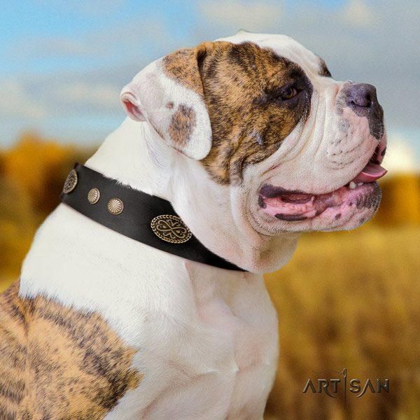 American Bulldog embellished full grain leather dog collar with designer adornments