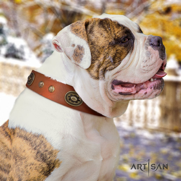 American Bulldog adorned full grain leather dog collar with incredible embellishments