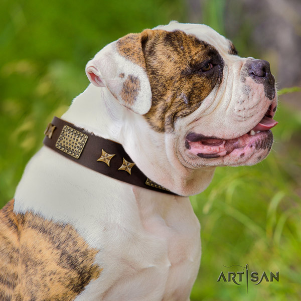 American Bulldog embellished genuine leather dog collar with unique embellishments