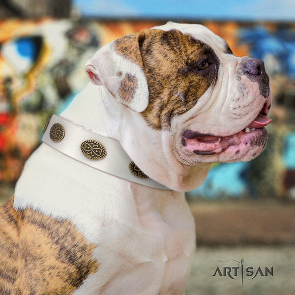 American Bulldog studded leather dog collar with inimitable adornments
