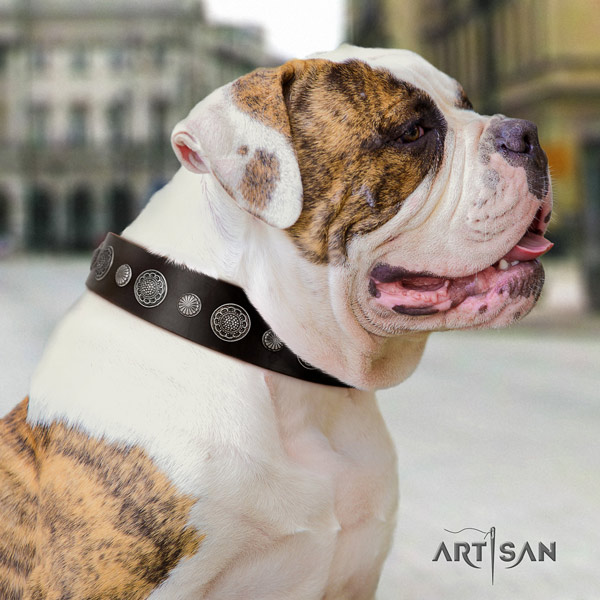 American Bulldog decorated genuine leather dog collar with impressive embellishments