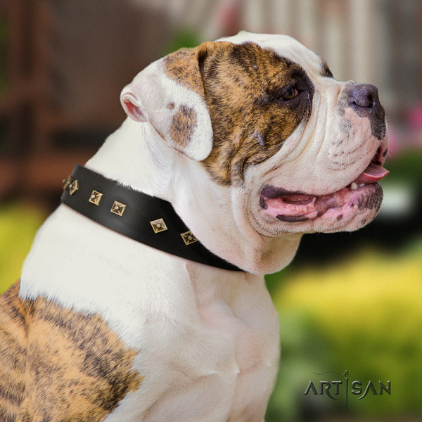 American Bulldog embellished full grain leather dog collar with stunning adornments