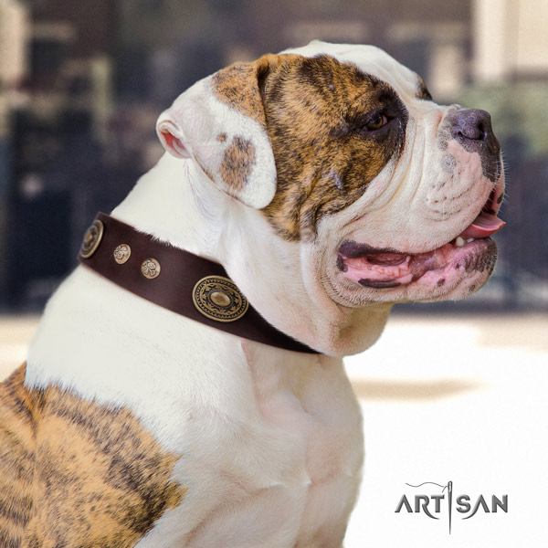 American Bulldog decorated genuine leather dog collar with stylish embellishments