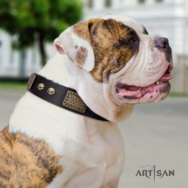 American Bulldog decorated leather dog collar with exquisite embellishments