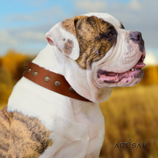 American Bulldog decorated full grain leather dog collar with stylish decorations