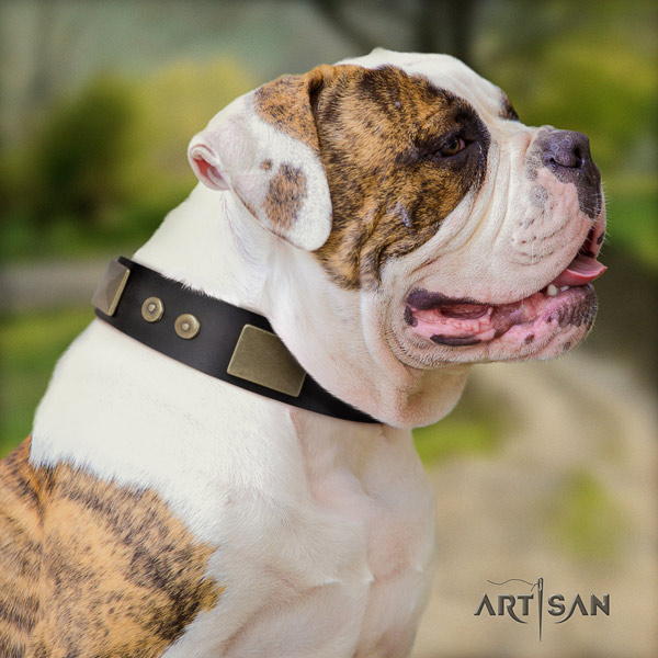 American Bulldog decorated genuine leather dog collar with amazing decorations