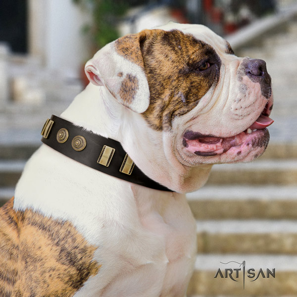 American Bulldog embellished genuine leather dog collar with exquisite adornments