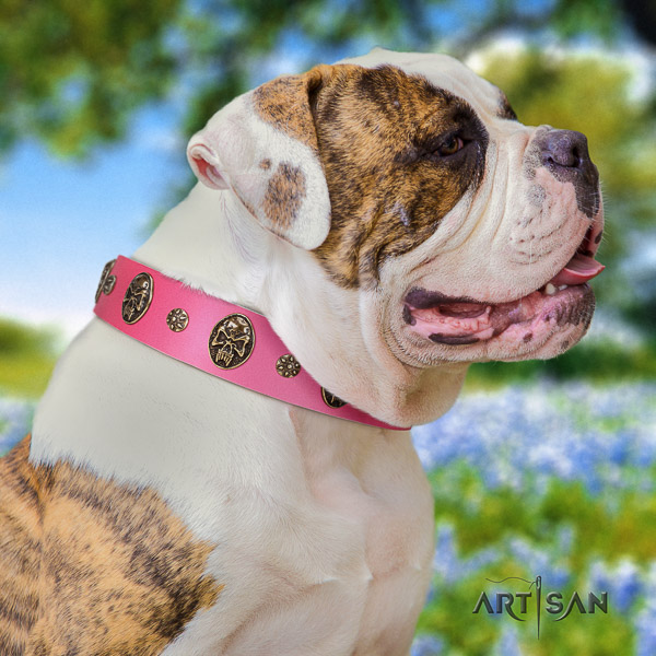 American Bulldog everyday walking full grain leather collar with decorations for your four-legged friend