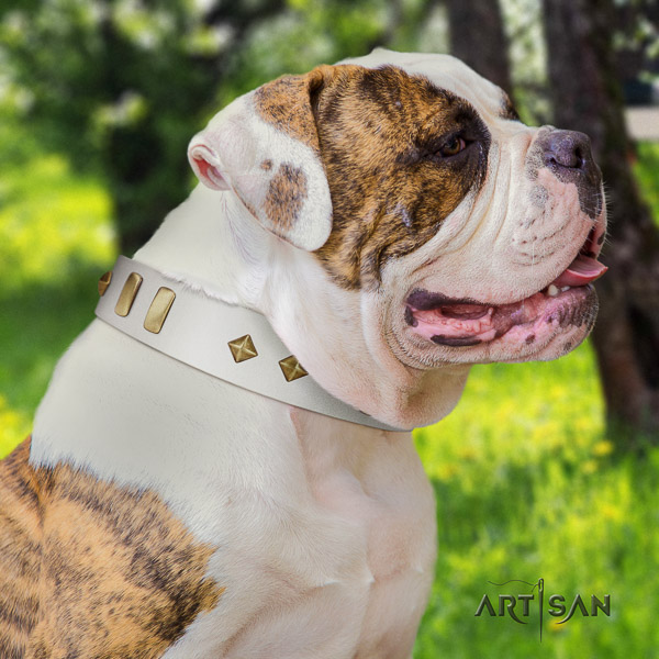 American Bulldog walking full grain natural leather collar with adornments for your canine