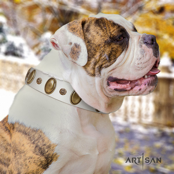 American Bulldog stylish walking leather collar with adornments for your canine