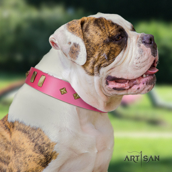 American Bulldog handy use leather collar with decorations for your pet