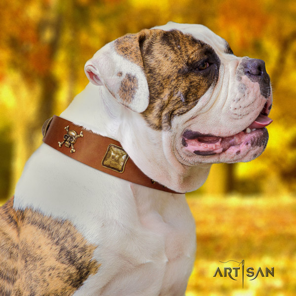 American Bulldog walking natural leather collar with decorations for your doggie