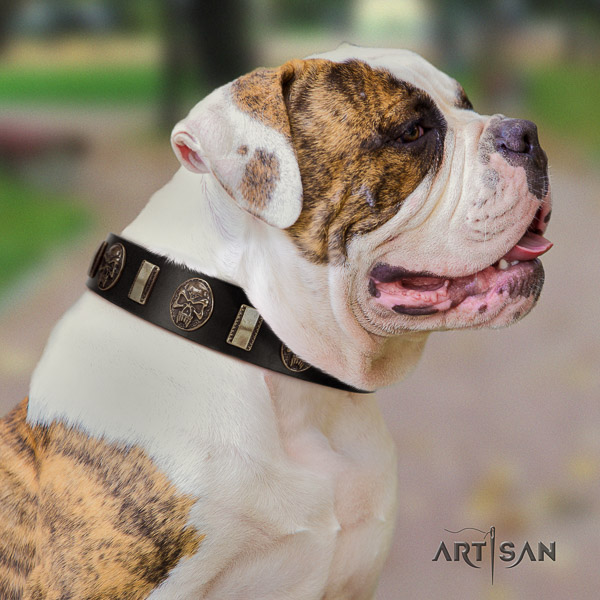 American Bulldog walking full grain genuine leather collar with adornments for your canine
